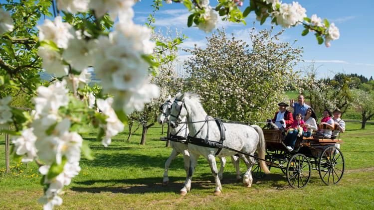 Apfelgärten