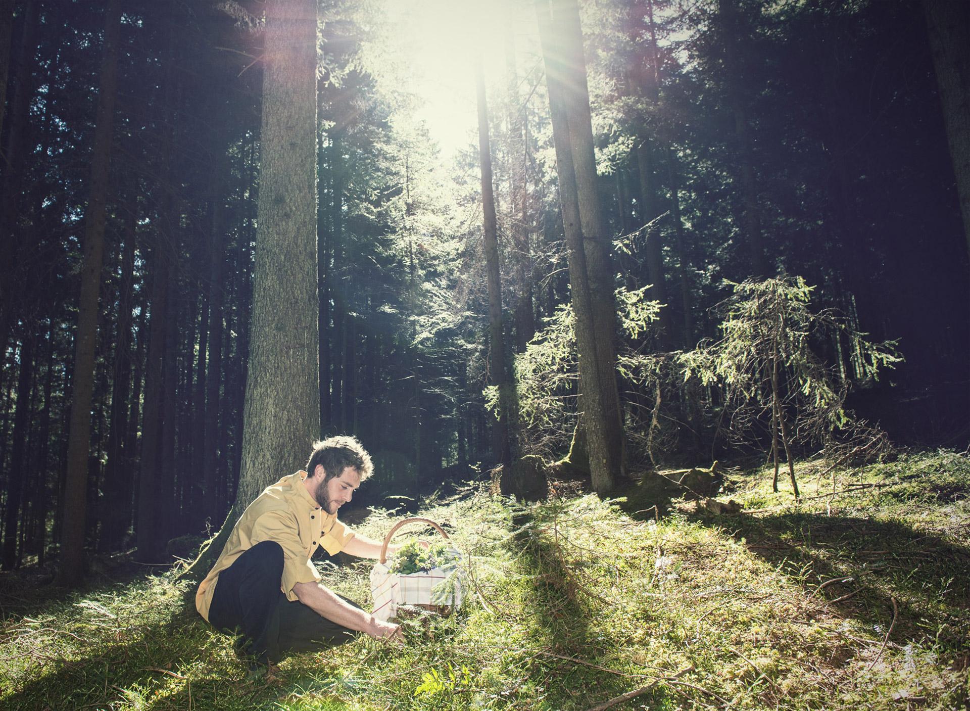 Kräuter sammeln im Wald