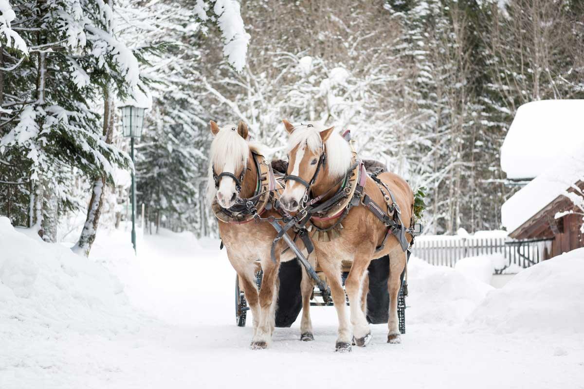 Pferdekutschenfahrt durch die idyllische Winterlandschaft